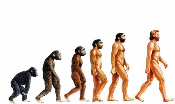 Human, Person, Ape