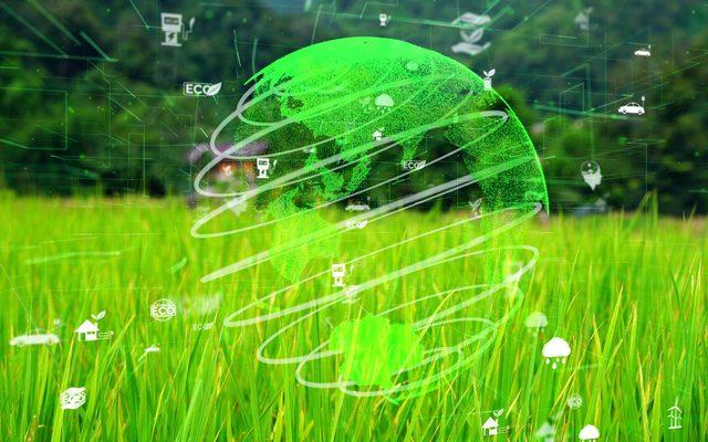 Grass, Plant, Turtle